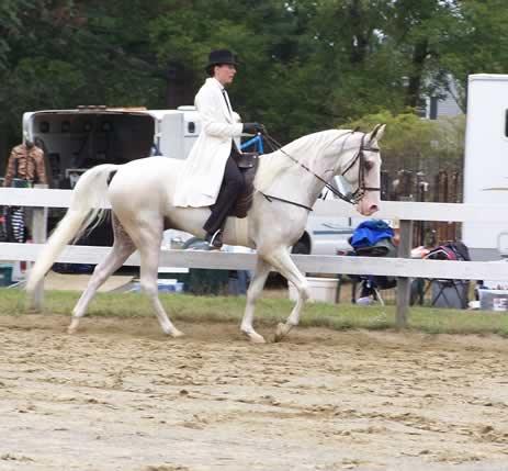 horse-camp-033