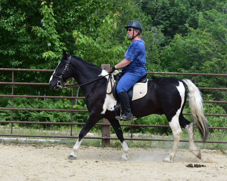 Sandy and Archie win at Gaited Horse Show